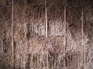 exterior bamboo pining