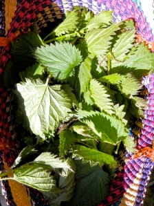 a basket of stinging nettles