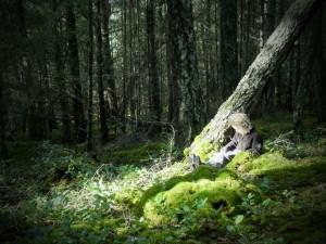 cedar's sit spot