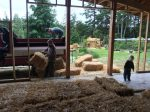 restacking bales